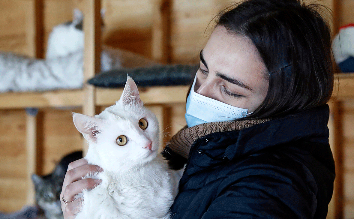 Asymptomatic Cats Spread Coronavirus to Other Cats
