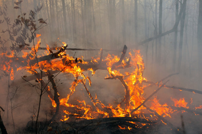 14 regions found to be of limited ready for forest fire season