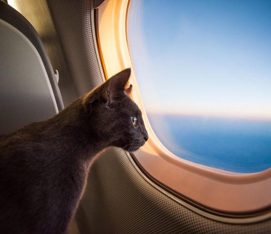 Export to Novosibirsk flight from Vietnam arrived 149 tourists and cat