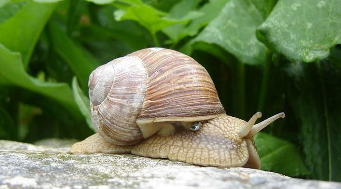 "Farmer Balayev ""finished off"" the President of the snails"