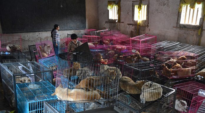 In China officially decided to ban the eating of dog meat