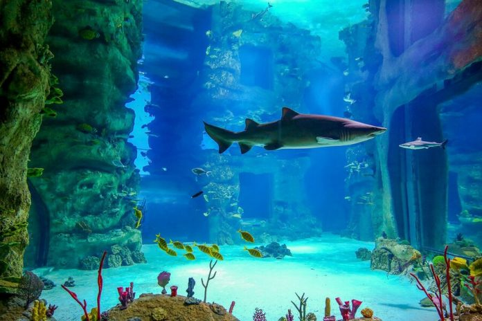 Moscow online: voyage to poisonous rocks and sharks-cats