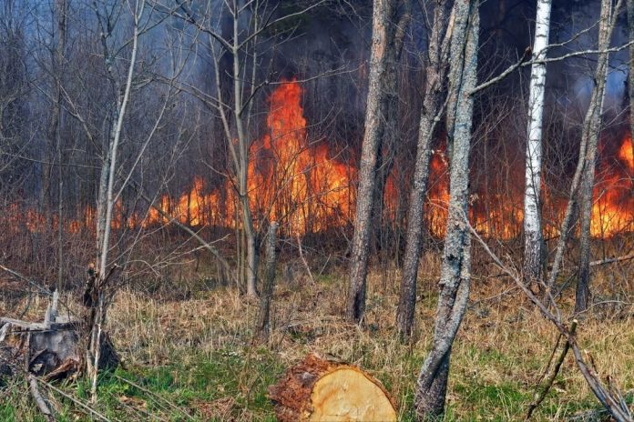 Vilfand called natural causes forest fire near Chernobyl